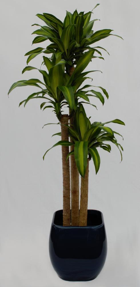 15 plante care filtreaz toxinele i mbun t esc calitatea aerului din casa ta edifica. Black Bedroom Furniture Sets. Home Design Ideas