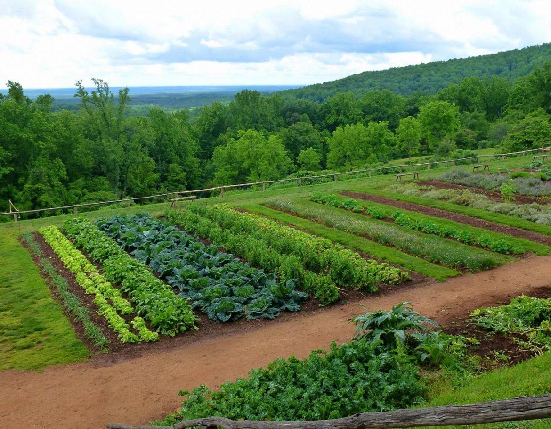compatibilitate legume