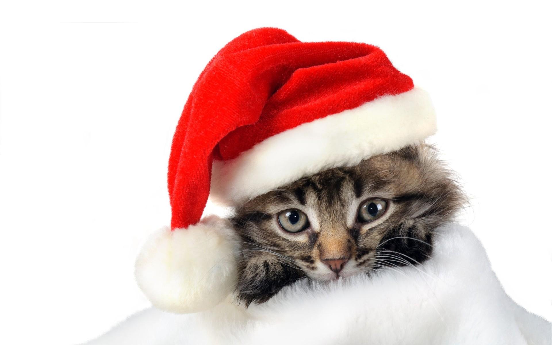 Pisicuţă Moş Crăciun