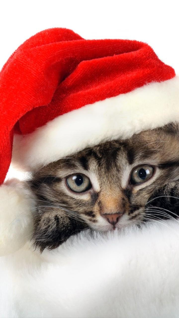 Pisicuţă Moş Crăciun - Mobil