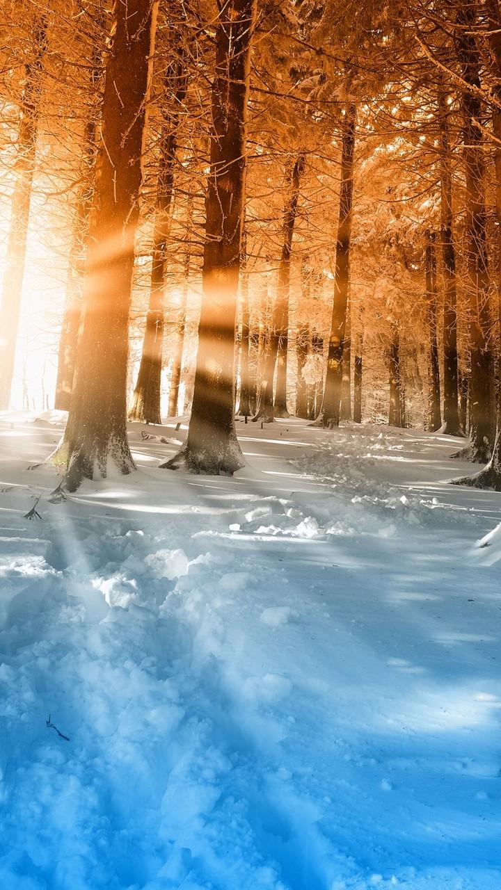 Iarna în pădure - Mobil