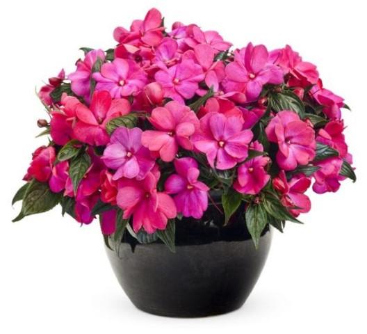 plante de interior cu flori