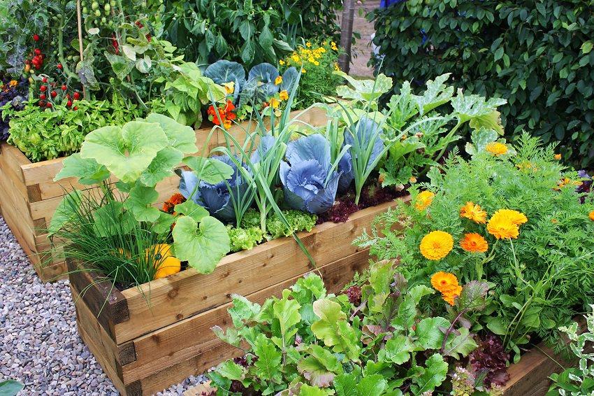 paturi de legume si flori