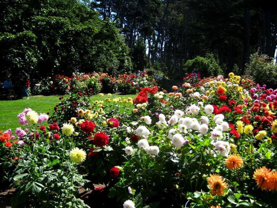 septembrie în grădină