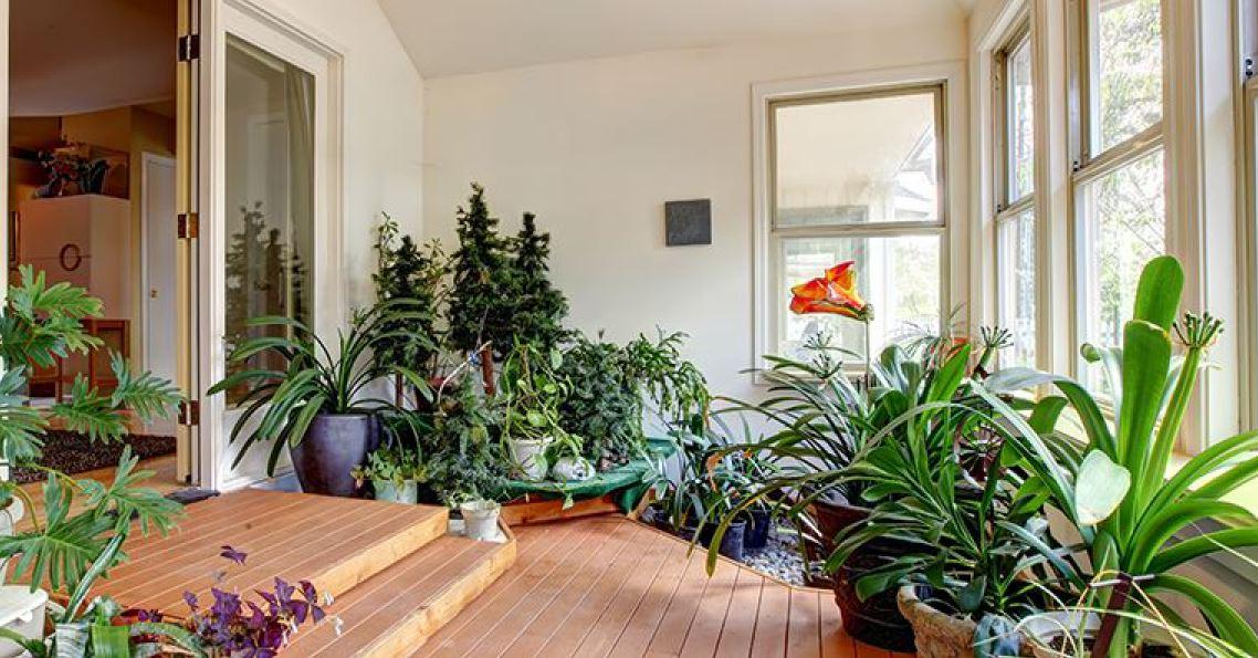 iernare plante