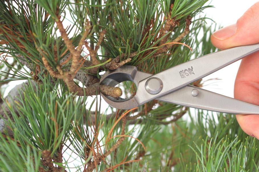 intretinere bonsai