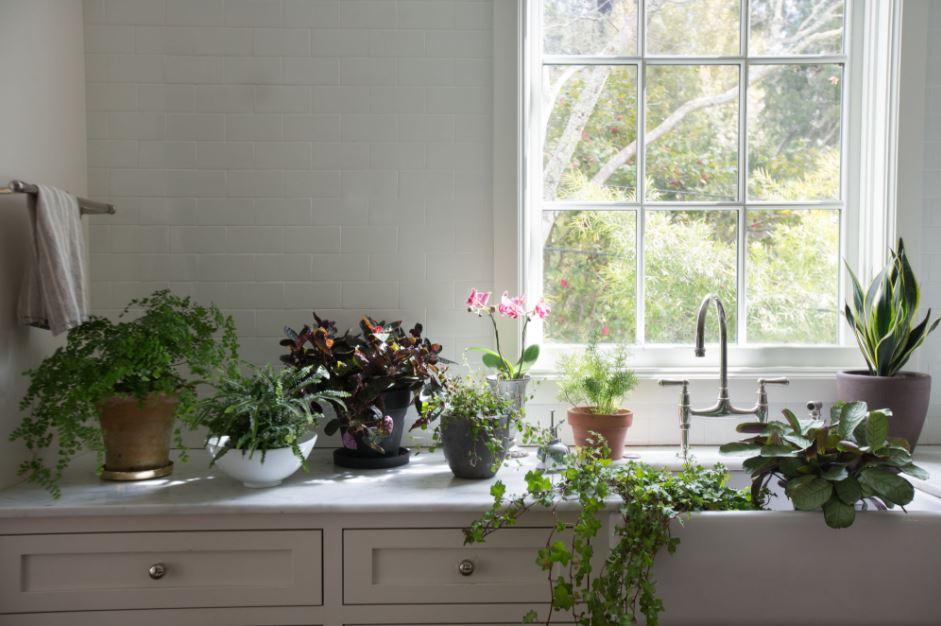plante de interior benefice