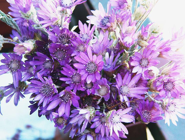 Buchete din flori nemuritoare în nuanţe de violet