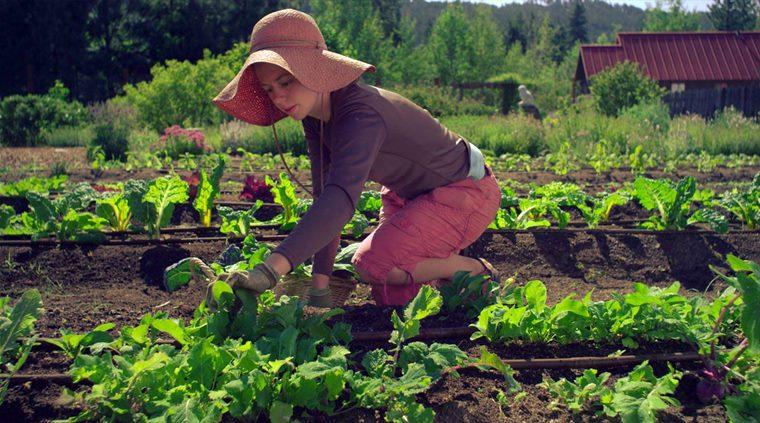 Grădinăritul Organic