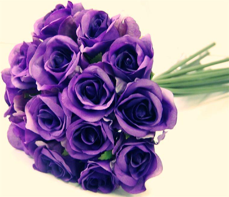 Trandafirii violet