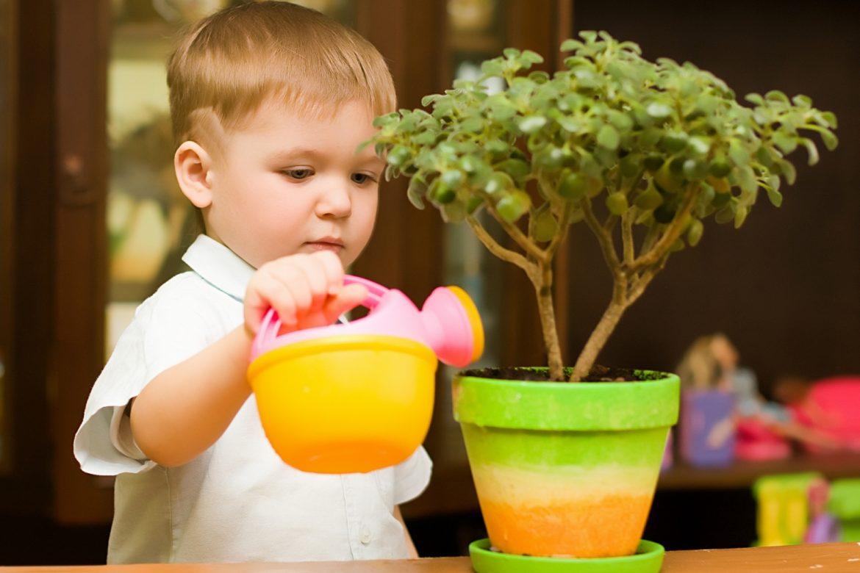 plante toxice pentru copii