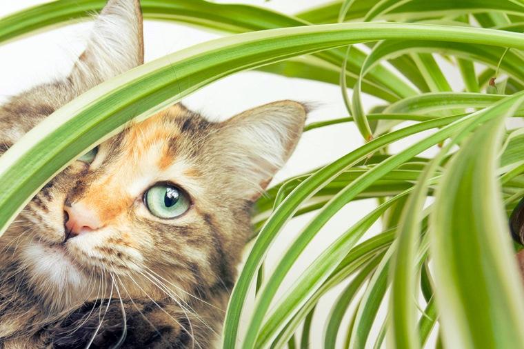 plante toxice pentru animale de companie