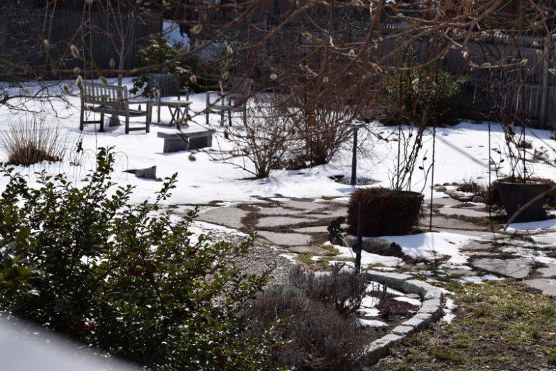 februarie în grădină