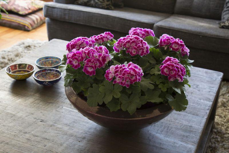 Plante de interior norocoase ce semnifica ii ascund for Plante de interior