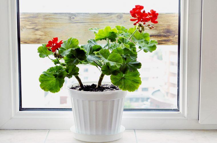 plante de interior norocoase