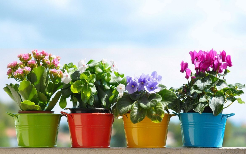 florile de ghiveci pentru fiecare zodie
