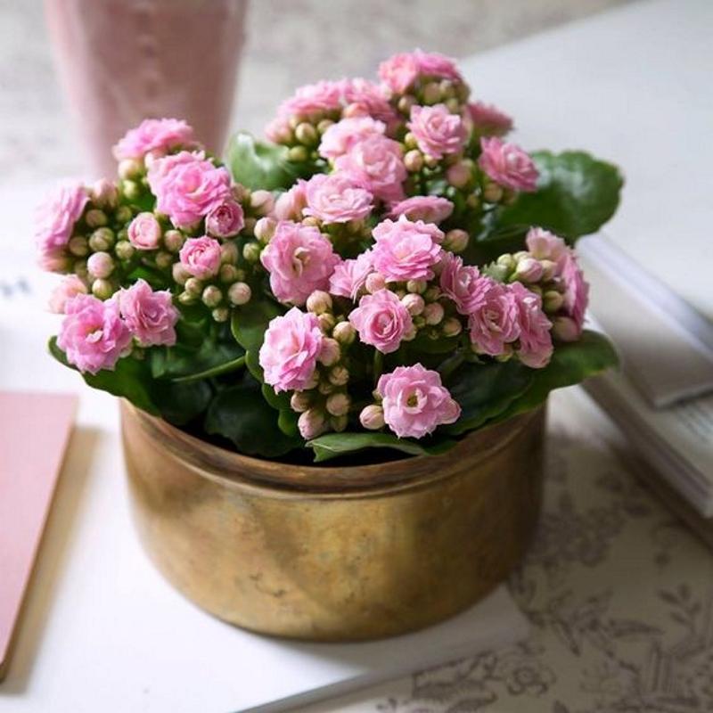plante de interior cu flori de iarna