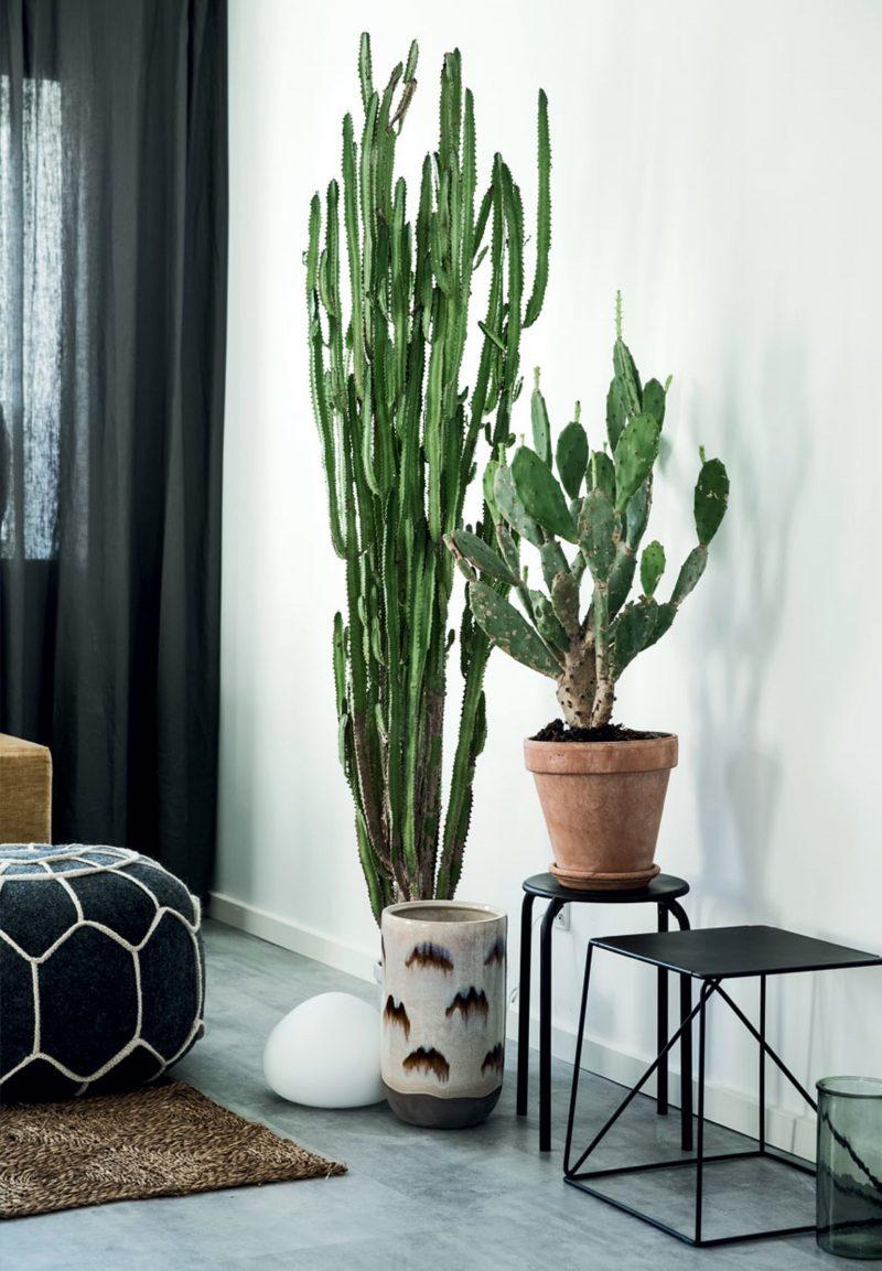 plante de talie înaltă