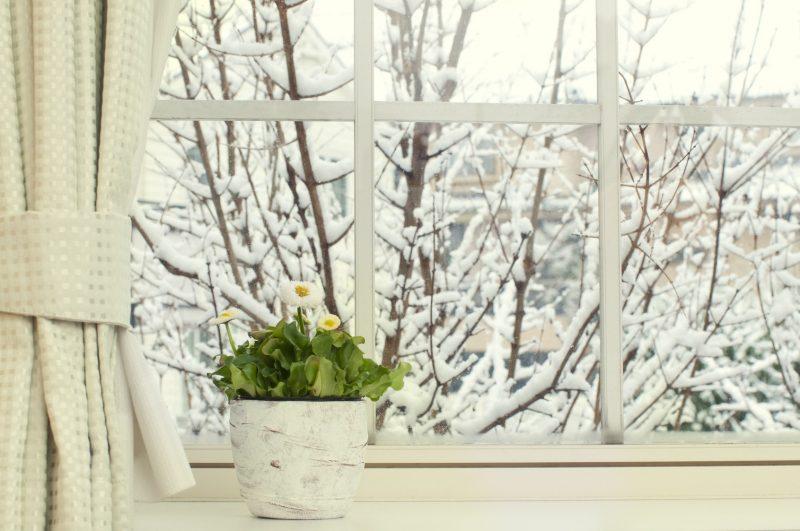 Cum îngrijim plantele de interior în timpul iernii