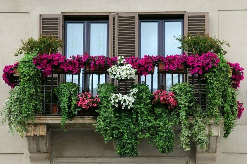 plante curgătoare cu flori