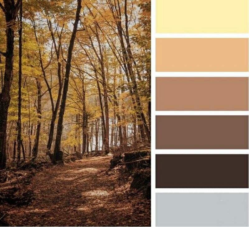 schema de culori maro