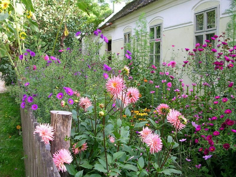 grădina sălbatică