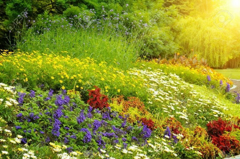 plante alergene